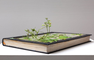 First Contact. Sculpture. Text, watercolour, glass. (2011) Image courtesy of artist.